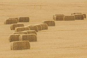 Usa, Montana, near Drummond. Bales of hay in a field that has just been harvested. by Tom Haseltine