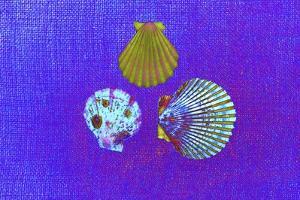 Blue Shells by Tom Kelly