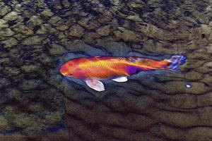 One Gold Fish by Tom Kelly