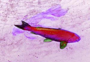 One Red Fish by Tom Kelly