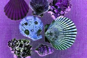 Seven SeaShells by Tom Kelly