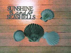 Sunshine Shells by Tom Kelly