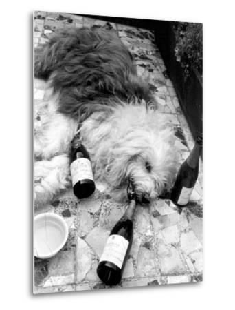 Dulux Sheepdog 1972