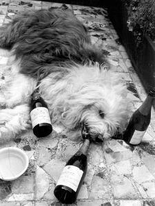 Dulux Sheepdog 1972 by Tom King