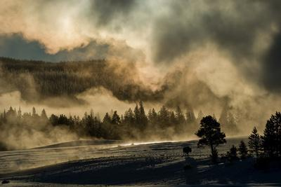 A Bison Cow Stands in the Distance Early Morning Fog and Steam from Old Faithful Geyser
