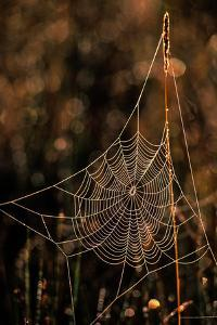 Dew on a Spider Web by Tom Murphy