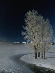 Frosty Cottonwood Trees Standing Near a Steamy Creek in Snowy Scene by Tom Murphy