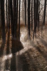 Light Shines Through a Forest by Tom Murphy