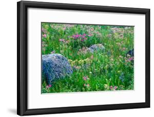 Sticky Geraniums, Summer Grasses, Wildflowers and Forb Meadow by Tom Murphy