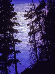 The Full Moon Created Bright Shadows and Reflections across the Still Surface of Yellowstone Lake by Tom Murphy