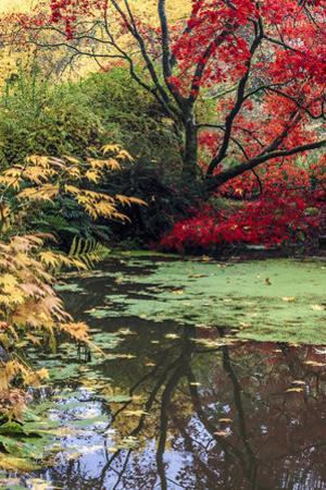 Fall Colors, Arboretum, Seattle, Washington, USA by Tom Norring