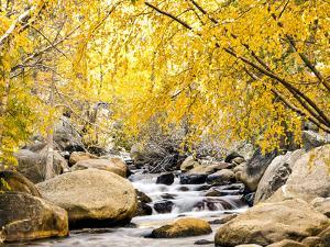 Fall Foliage at Creek, Eastern Sierra Foothills, California, USA by Tom Norring