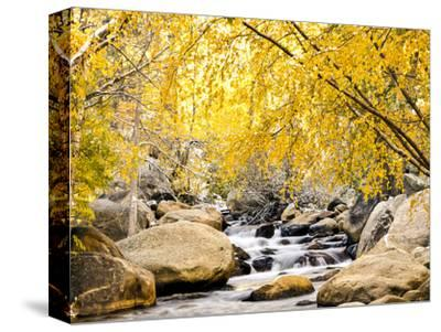 Fall Foliage at Creek, Eastern Sierra Foothills, California, USA