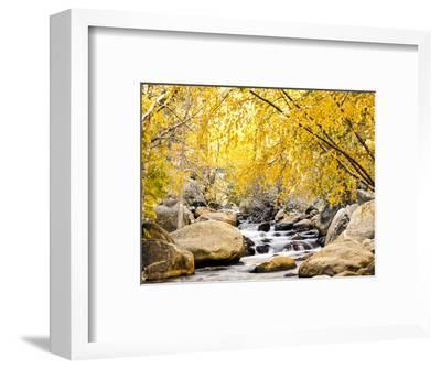 Fall Foliage at Creek, Eastern Sierra Foothills, California, USA