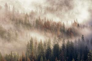 Misty Morning. Seen from Tunnel View. Yosemite National Park, California. by Tom Norring