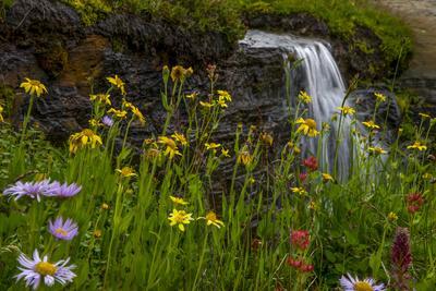 Waterfall behind wildflowers. Glacier National Park. Montana. Usa.