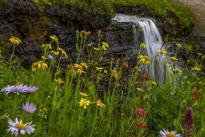 Waterfall behind wildflowers. Glacier National Park. Montana. Usa. by Tom Norring