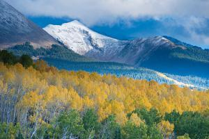 Aspen and Snow-Capped Peaks, La Sal Mountains, Utah by Tom Till