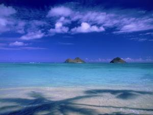 Shadow of Palm Trees on Lanikai Beach, Oahu, HI by Tomas del Amo