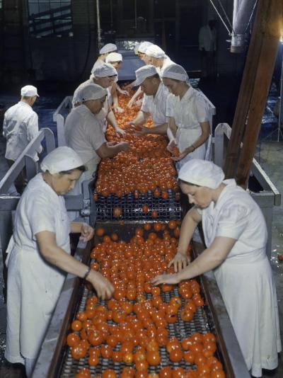 Tomato Factory Workers Remove Bruised Fruit from a Conveyor Belt-Joseph Baylor Roberts-Photographic Print