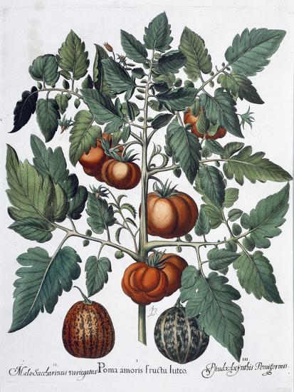 Tomatoes and melons, 1613-Unknown-Giclee Print