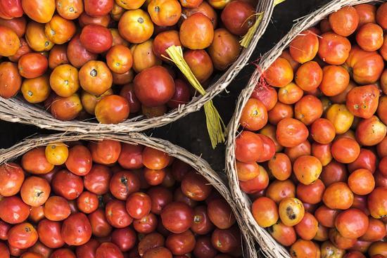 Tomatoes at Hpa an Morning Market, Kayin State (Karen State), Myanmar (Burma), Asia-Matthew Williams-Ellis-Photographic Print