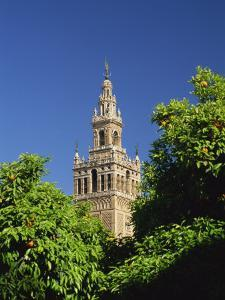 Giralda Framed by Orange Trees, Seville, Andalucia, Spain, Europe by Tomlinson Ruth
