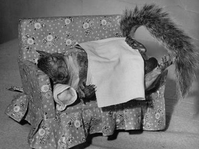 Tommy Tucker the Squirrel Sleeping on a Tiny Couch-Nina Leen-Photographic Print