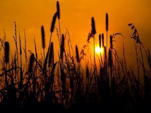 Golden Nights on the Prairie by tomofbluesprings