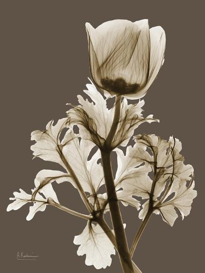 Tonal Anemone-Albert Koetsier-Art Print