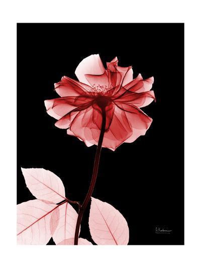 Tonal Rose on Black 2-Albert Koetsier-Art Print