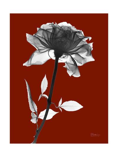 Tonal Rose on Crimson-Albert Koetsier-Art Print