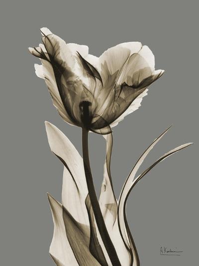 Tonal Tulip on Gray-Albert Koetsier-Art Print