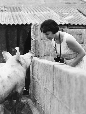 Woman and pig, 1960s