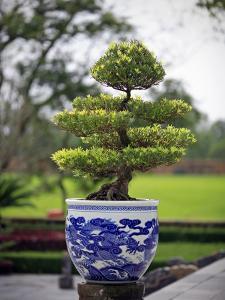 Bonsai Tree at Thai Hoa Palace by Tony Burns