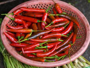 Red Chilli Peppers by Tony Burns