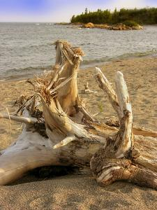 Driftwood by Tony Craddock