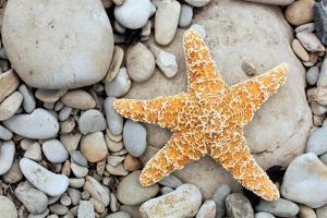 Starfish on a Beach by Tony Craddock