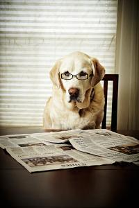 Dog Reading the Newspaper and Wearing Glasses by Tony Garcia
