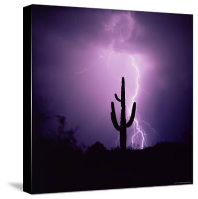 Cactus Silhouetted Against Lightning, Tucson, Arizona, USA