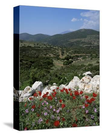 Flowers and Landscape, Greece