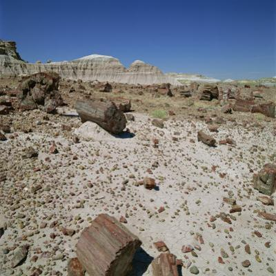 Petrified Forest, Arizona, United States of America, North America