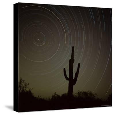 Star Trek Over Cacti, Tracing Stars as They Move Round North Star, Tucson, Arizona, USA