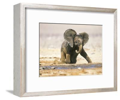 African Elephant Calf on Knees by Water, Kaokoland, Namibia