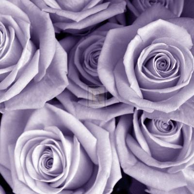 Bunch of Flowers III