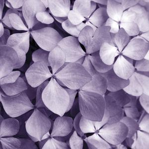 Bunch of Flowers IV by Tony Koukos