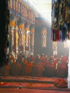 Monks Inside the Main Prayer Hall, Drepung Buddhist Monastery, Lhasa, Tibet, China by Tony Waltham