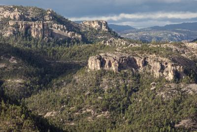 Volcanic plateau of Sierra Tarahumara, above Copper Canyon, Chihuahua, Mexico, North America