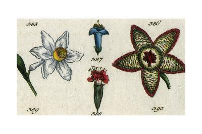 Top View and Side View of Various Flowers--Art Print