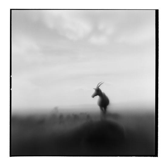 Topi Antelope, Masai Mara Game Reserve, Kenya-Paul Souders-Photographic Print